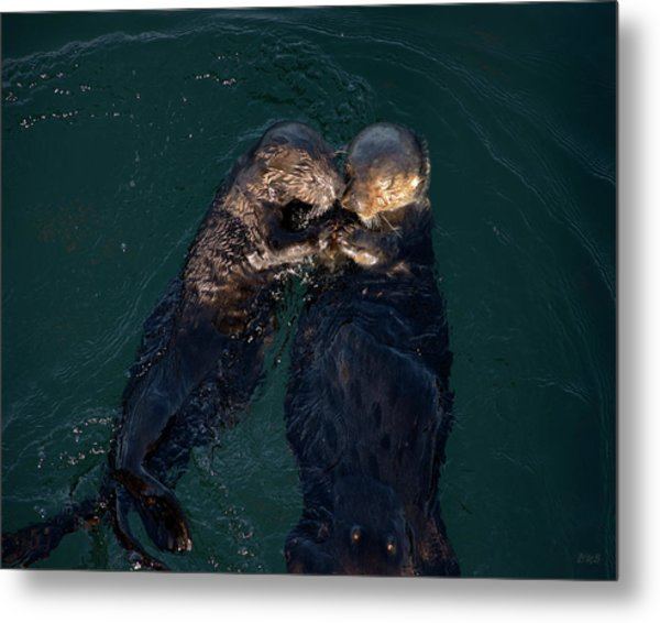Sea Otters II Color Metal Print