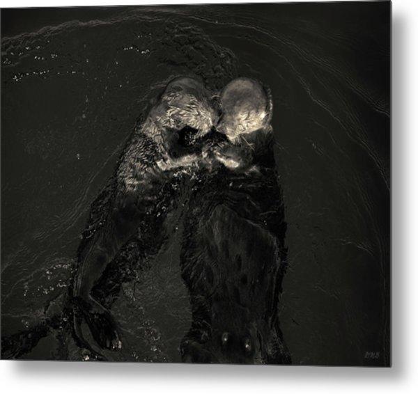 Sea Otters II Toned Metal Print by David Gordon