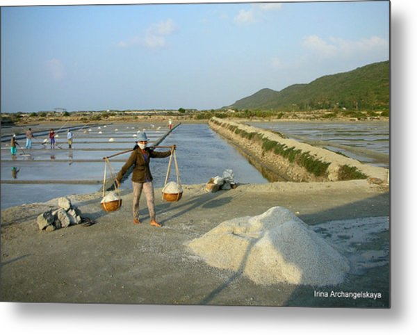 Sea Salt Harvesting In Vietnam  Metal Print