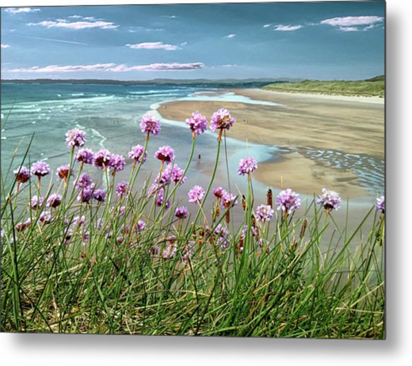 Sea Thrift Wild Flowers - On The Cliff Edge Above Tullan Strand Metal Print