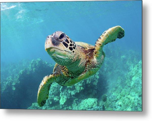 Sea Turtle, Hawaii Metal Print by Monica and Michael Sweet