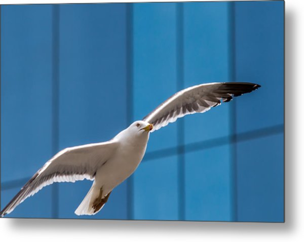 Seabird Flying On The Glass Building Background Metal Print