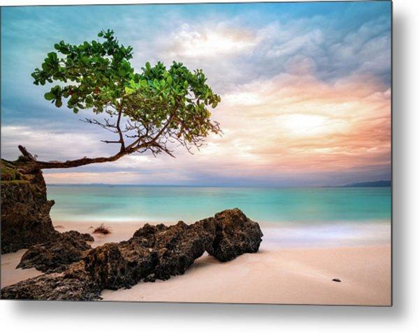 Seagrape Tree Metal Print