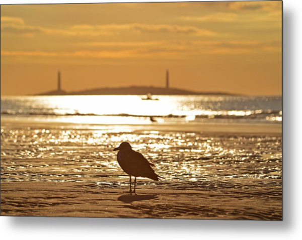 Seagull Admiring Thacher Island Gloucester Ma Good Harbor Beach Metal Print