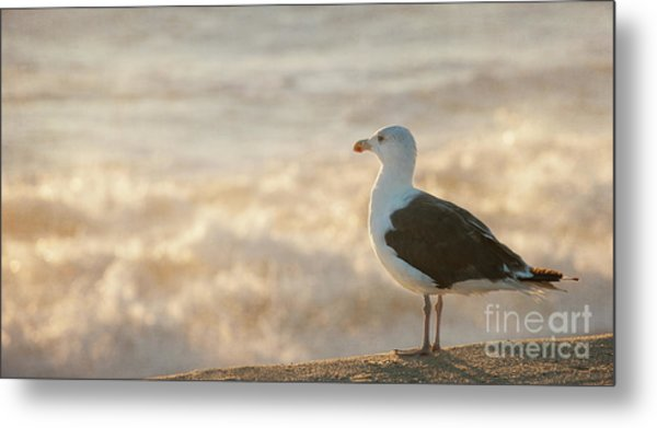 Seagull At Sunrise Metal Print