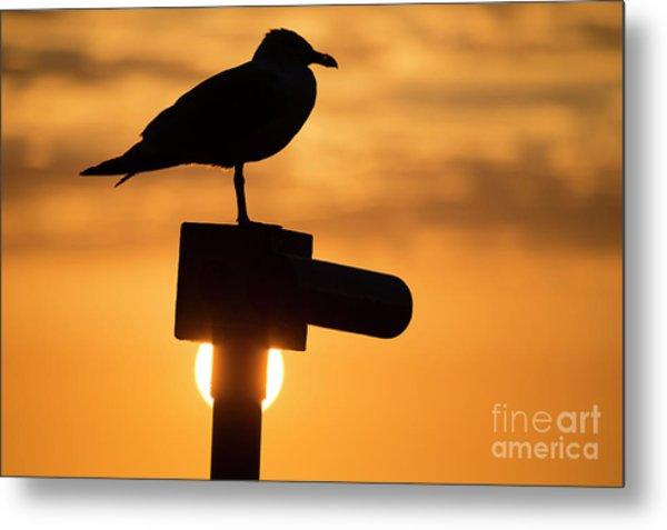 Seagull At Sunset Metal Print