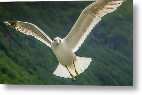 Seagull At The Fjord Metal Print