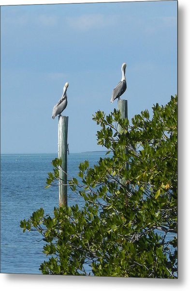 Seagull Metal Print by Audrey Venute