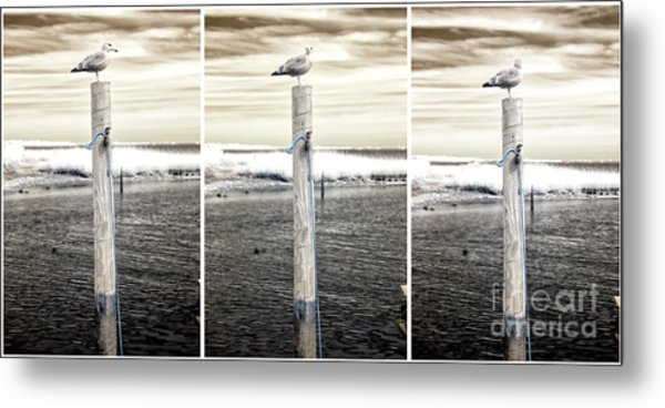 Seagull Collage Infrared Metal Print