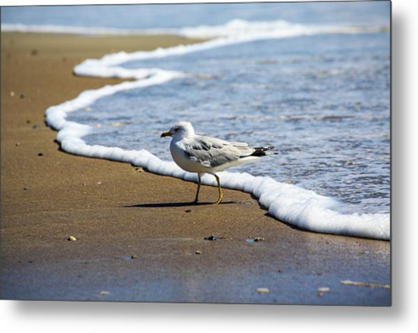 Metal Print featuring the photograph Seagull by David Chandler