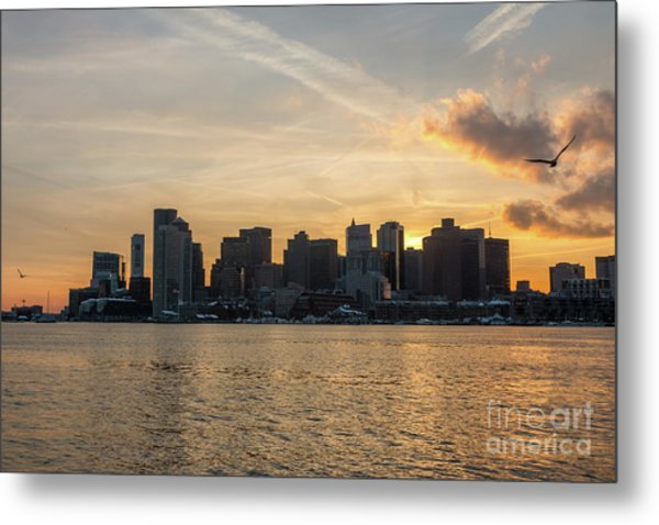 Seagull Flying At Sunset With The Skyline Of Boston On The Backg Metal Print