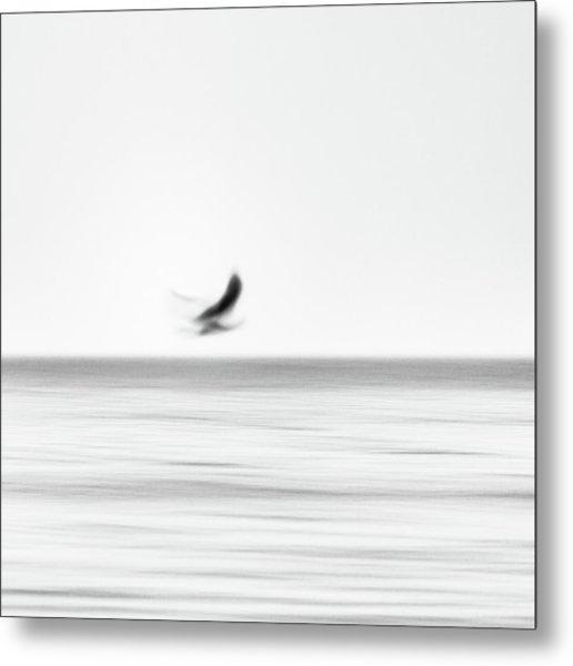 Seagull Metal Print by Holger Nimtz