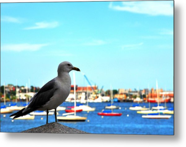 Seagull In Boston Harbor Metal Print by Andrew Dinh