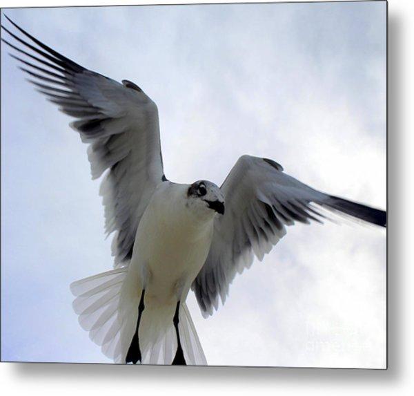 Seagull In Flight I Metal Print