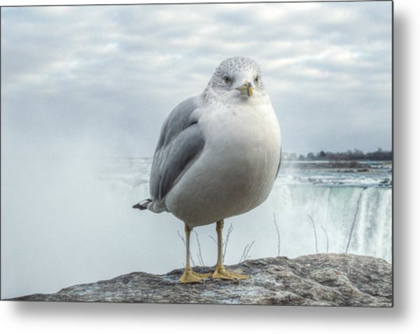 Seagull Model Metal Print