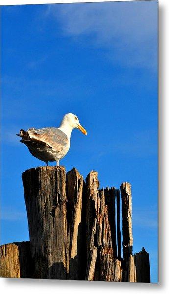 Seagull On A Dock 2 Metal Print by Andrew Dinh