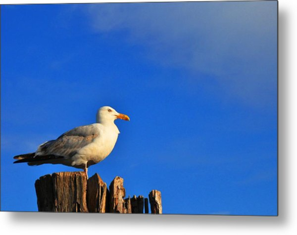 Seagull On A Dock Metal Print by Andrew Dinh