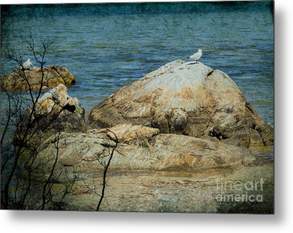 Seagull On A Rock Metal Print