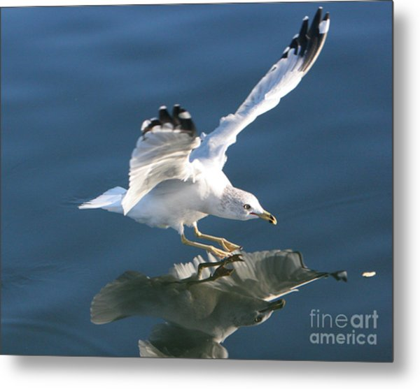 Seagull Reflection Metal Print