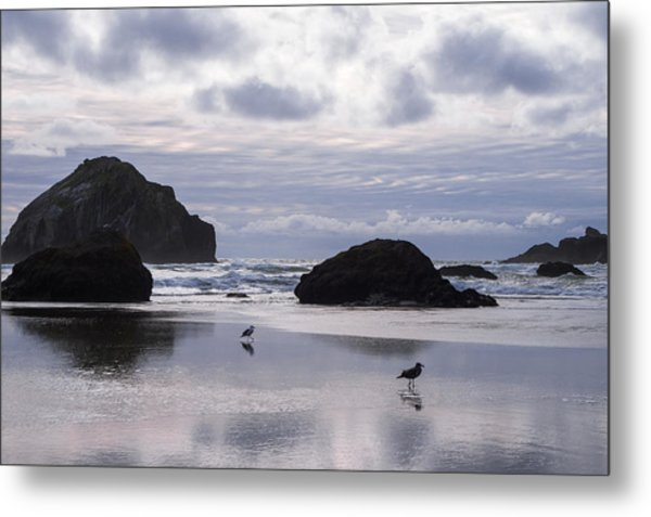 Seagull Reflections Metal Print