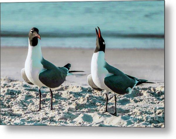 Seagull Serenade 4954 Metal Print