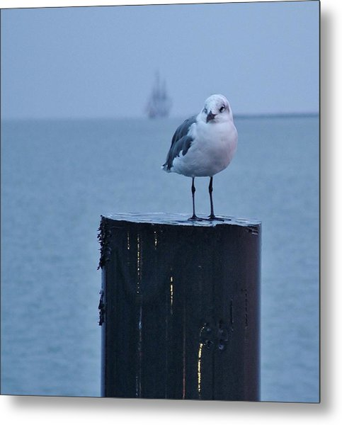 Seagull Ship Metal Print
