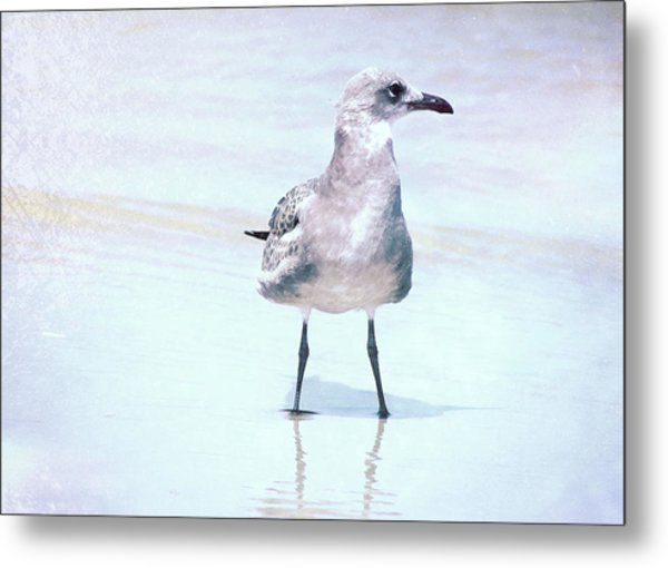 Seagull Stance Metal Print by JAMART Photography