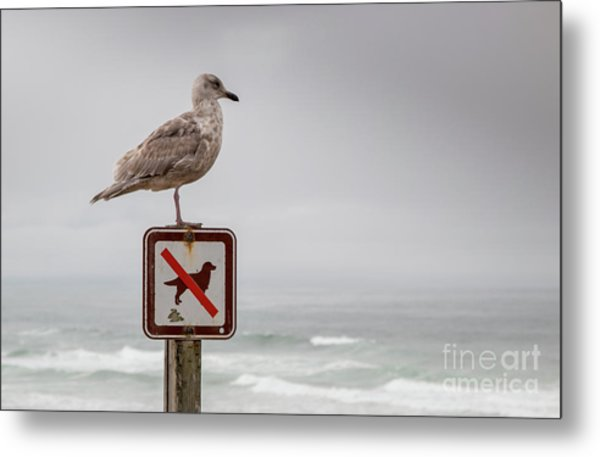 Seagull Standing On Sign And Looking At The Ocean Metal Print