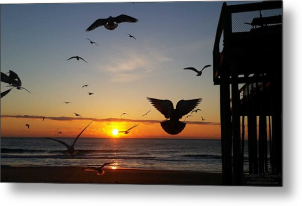Seagulls At Sunrise Metal Print
