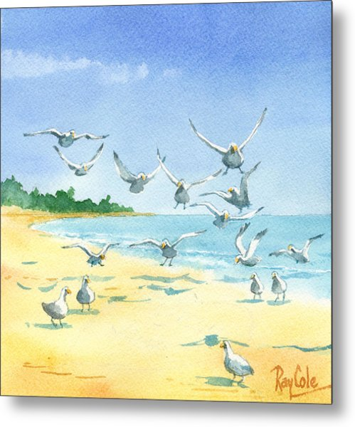 Seagulls Metal Print by Ray Cole