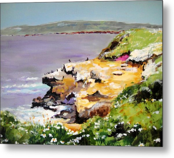 Seals In The Sun Lajolla Ca Metal Print