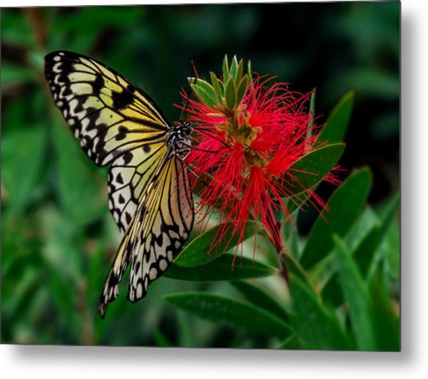 Searching For Nectar Metal Print