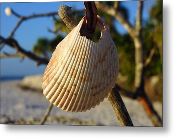 Cockelshell On Tree Branch Metal Print