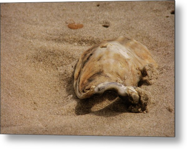 Seashells At The Seashore Metal Print by JAMART Photography