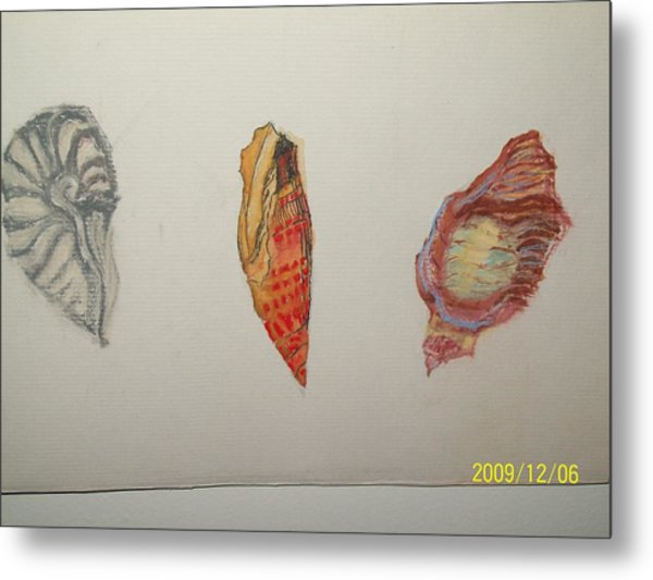 Seashells By The Seashore Metal Print by Nancy Caccioppo