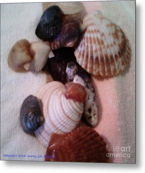 Seashells Metal Print by Jamey Balester