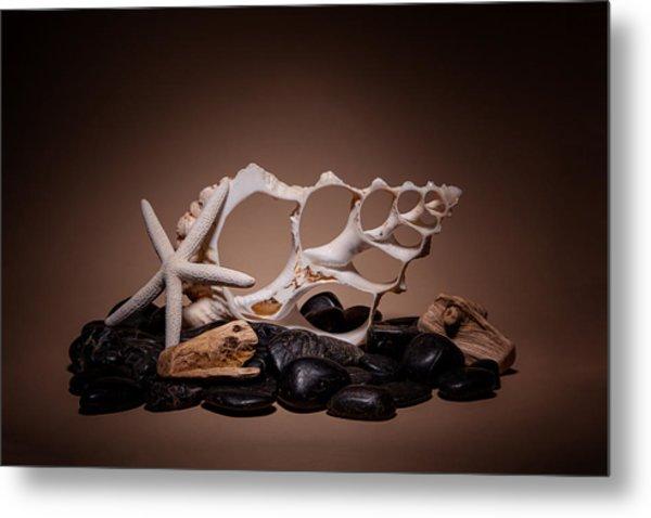 Seashells On The Rocks Metal Print