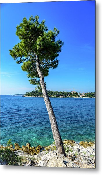 Seaside Leaning Tree In Rovinj, Croatia Metal Print