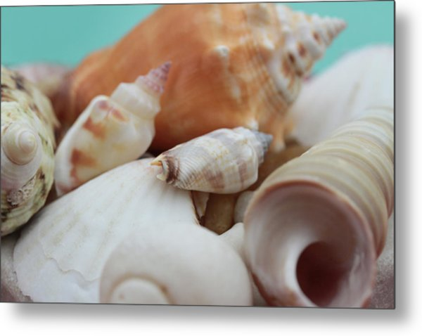 Seaside Seashells Metal Print