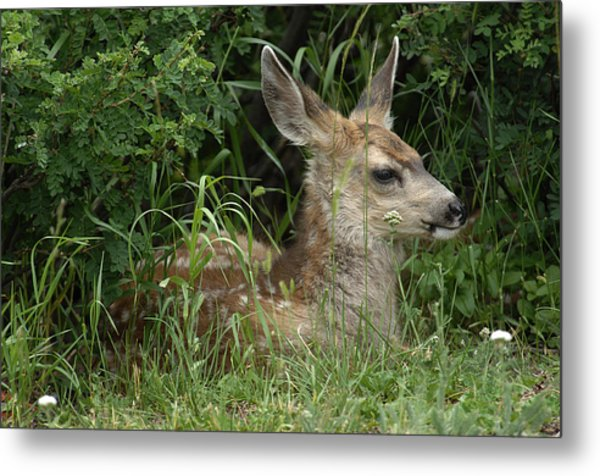 Seclusion Metal Print by Keith Lovejoy