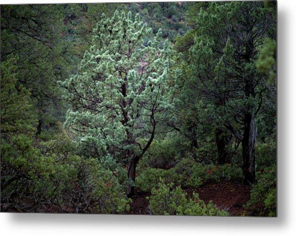 Sedona Tree #1 Metal Print