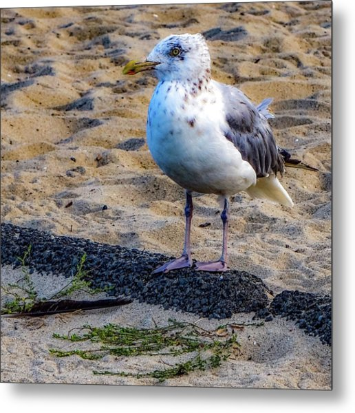 See The Gull Metal Print
