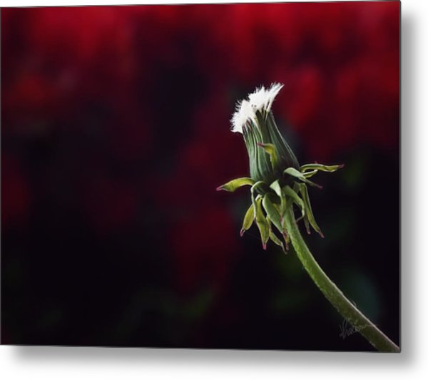 Seeing Red Metal Print