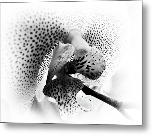 Seeing Spots Metal Print