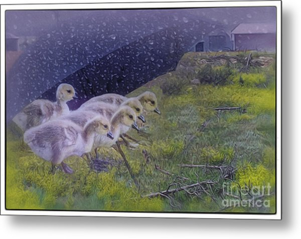 Seeking Shelter From The Storm Digital Artwork By Mary Lou Chmur Metal Print