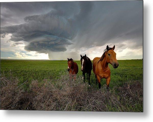 Sensing The Storm #3 Metal Print