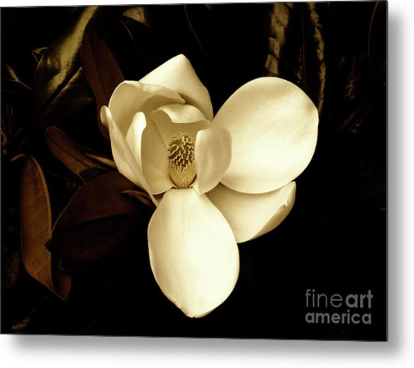 Sepia-toned Magnolia Metal Print
