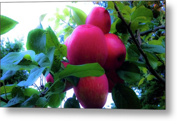Metal Print featuring the photograph September Harvest by Pacific Northwest Imagery