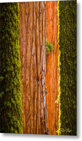 Sequoia Abstract Metal Print
