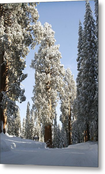 Sequoia National Park 4 Metal Print